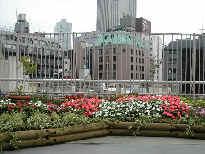 2003/6/30 区役所屋上緑化、ビオトープ