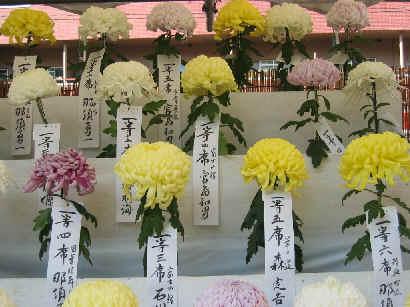 2004/11/5 豊島区「菊花大会」