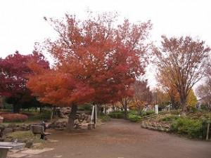 2006/12/15 「ノロウイルス」豊島で猛威!